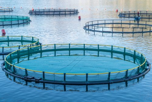 Sodium humate used in aquaculture