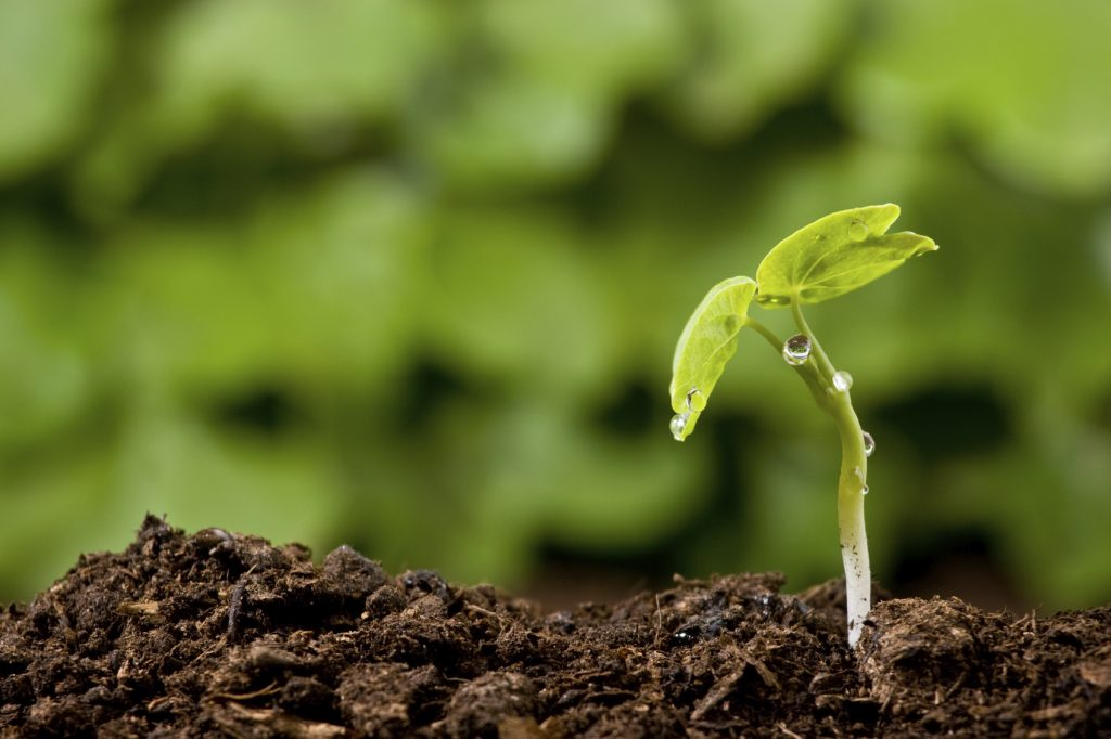 The role of fulvic acid in improving soil